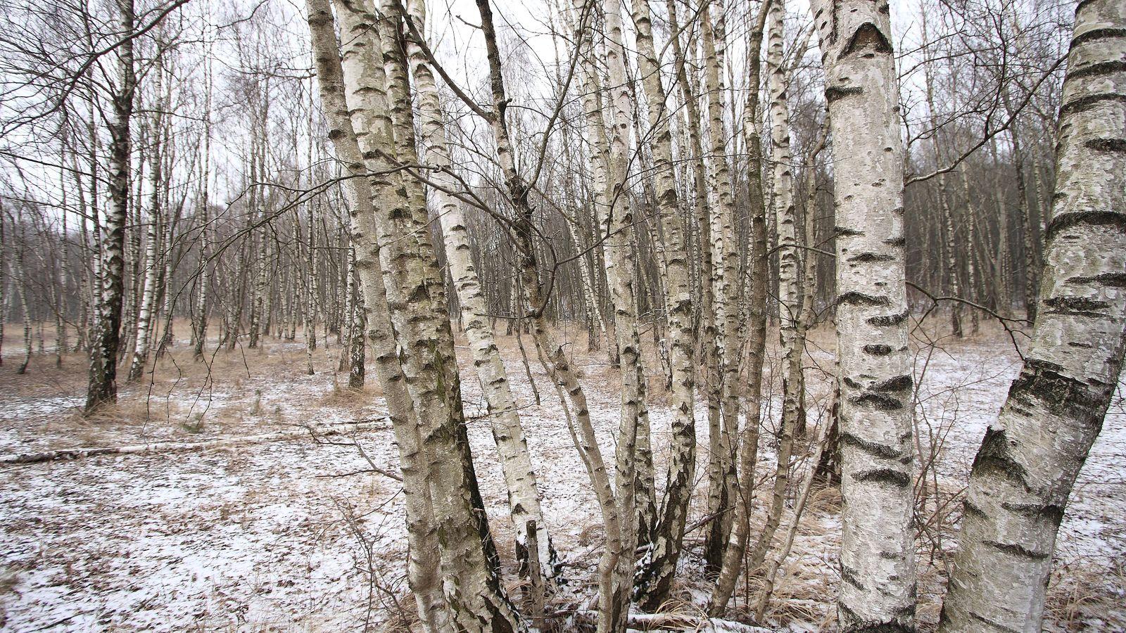 herbst-winter_006