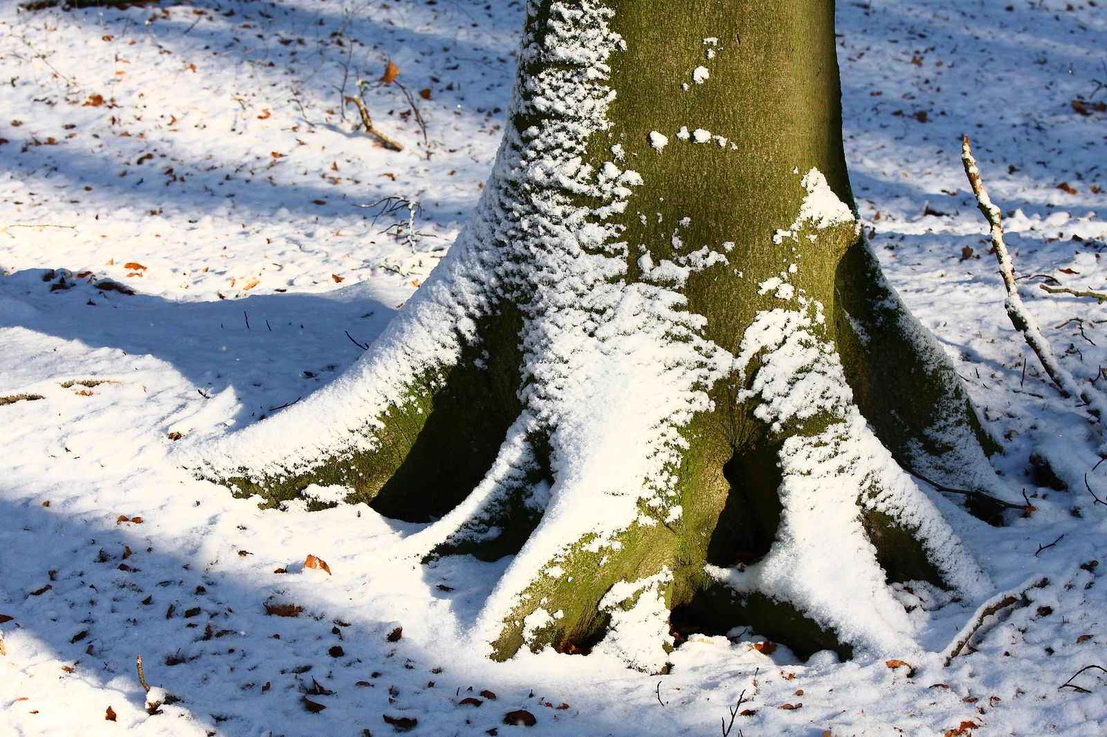 herbst-winter_008