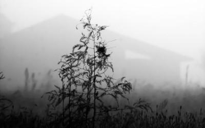 Herbst- und Winterimpressionen
