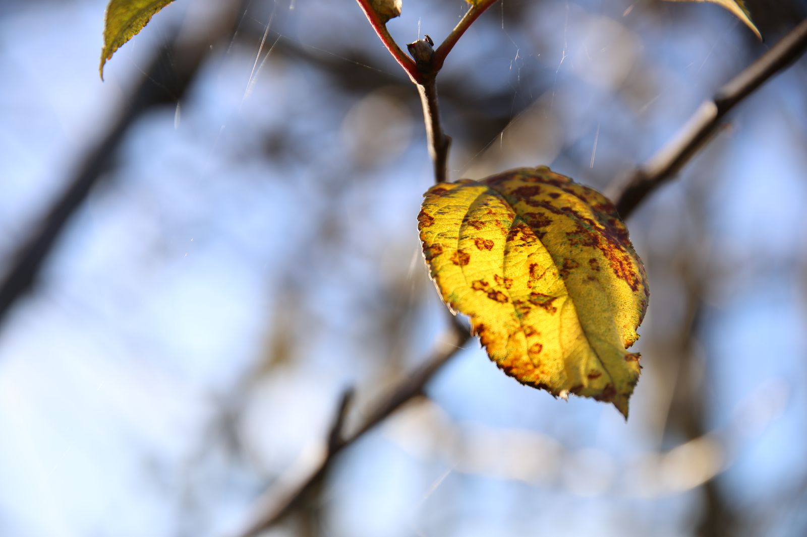 herbst-winter_004