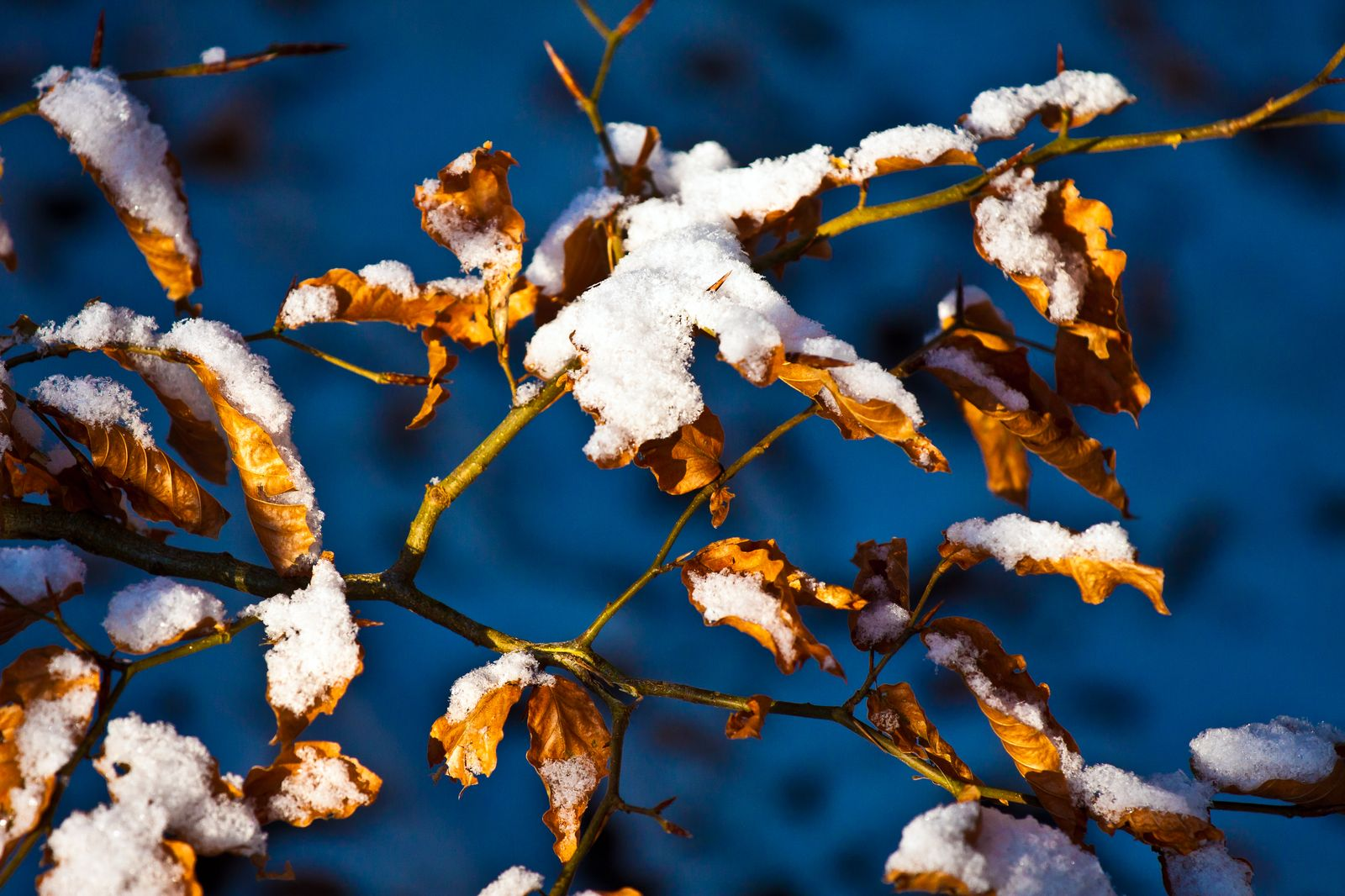 herbst-winter_009